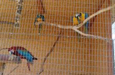 папуги зоопарк