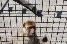 мавпочка зоопарк