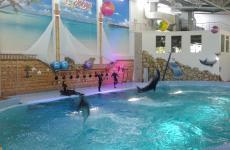 дельфіни екскурсія