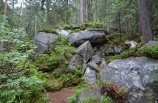 прут карпати