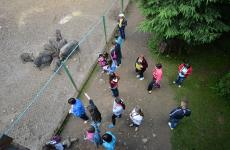 карпати зоопарк