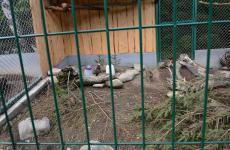 вольєри для тварин крпати