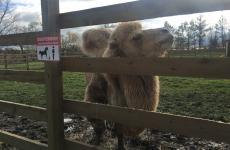 екскурсія для тварин