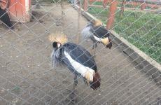 фазани зоопарк