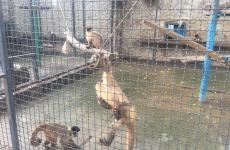 мавпи зоопарк