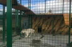 тварини у зоопарку
