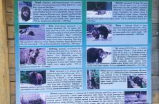 центр бурого ведмедя
