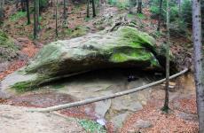 карпатські праліси